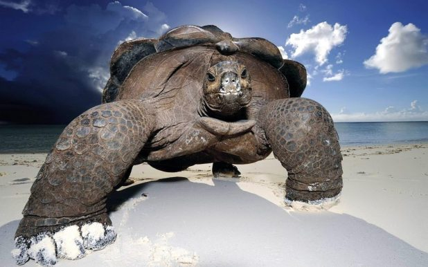 wallpaper-galapagos-giant-tortoise 10 Animals That Outlive People