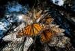 the mountain of butterflies (19)