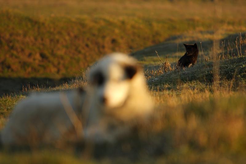 flock-watchers.jpg