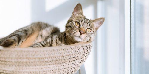 international-cat-day-celebrate-and-raise-awareness