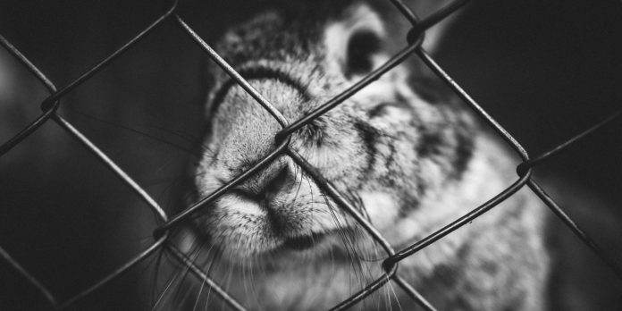 go-cruelty-free-a-beginners-guide