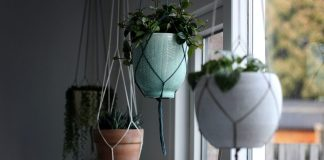 five-plants-to-hang-in-your-home