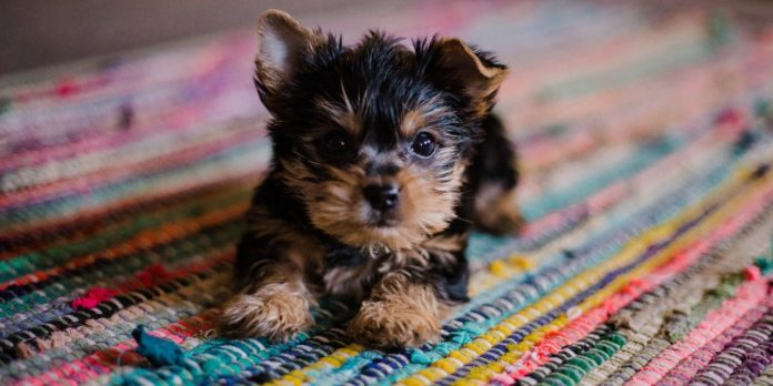 here-are-the-top-products-for-your-furry-friends
