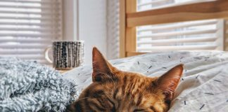 eight-most-common-cat-sounds-explained