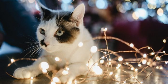 gift-ideas-for-your-cat