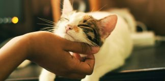 5-ways-to-be-a-better-human-for-your-cat