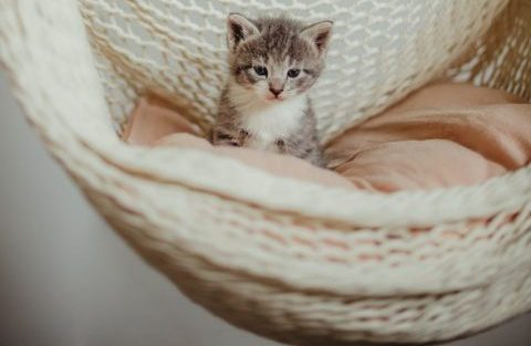 Cats: 5 crazy reasons why they are just like babies