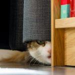 cat confidential
