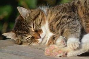 Lll Wie Viel Katzen Schlafen Power Pfoten