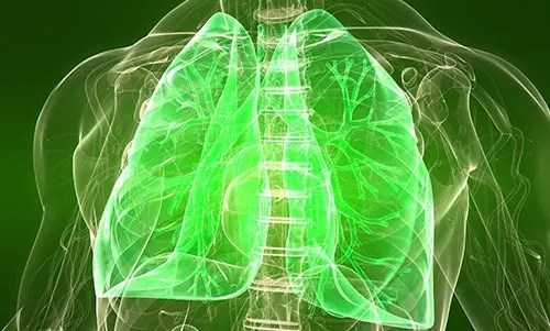 How The Inspiratory Muscles Contribute To The Breathing Process