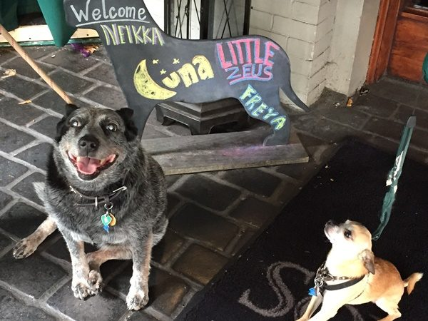 welcome sign with dogs