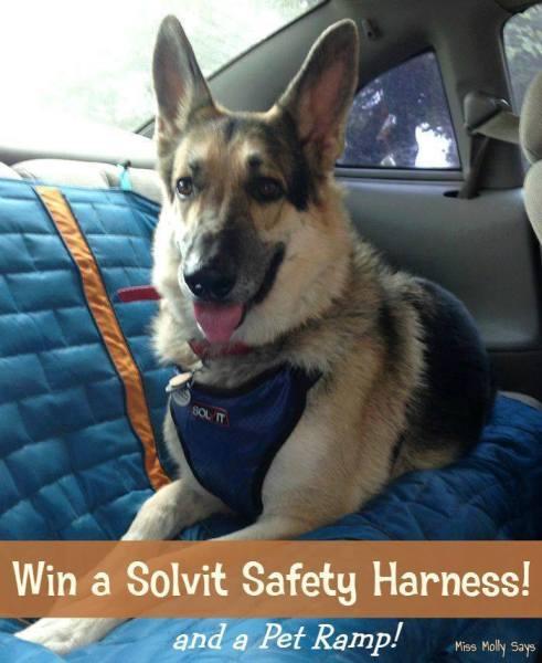 saftey harness