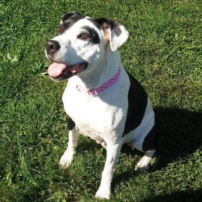 Pet Adoption – Meet Jenna