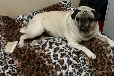 Adopt a Pet – Meet Molly