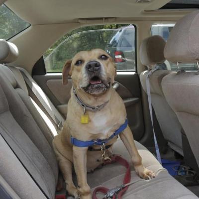 Pet Adoption – Meet Mrs. Kisses