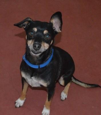 Adopt a Pet – Meet Sammy