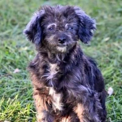 Adopt a Dog- Meet Lola
