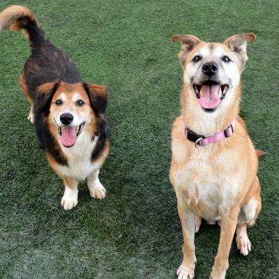 Pet Adoption – Buddha and Chai
