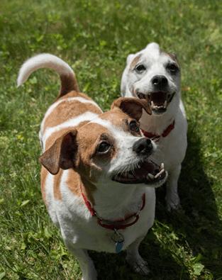 Pet Adoption – Henry and Sukie