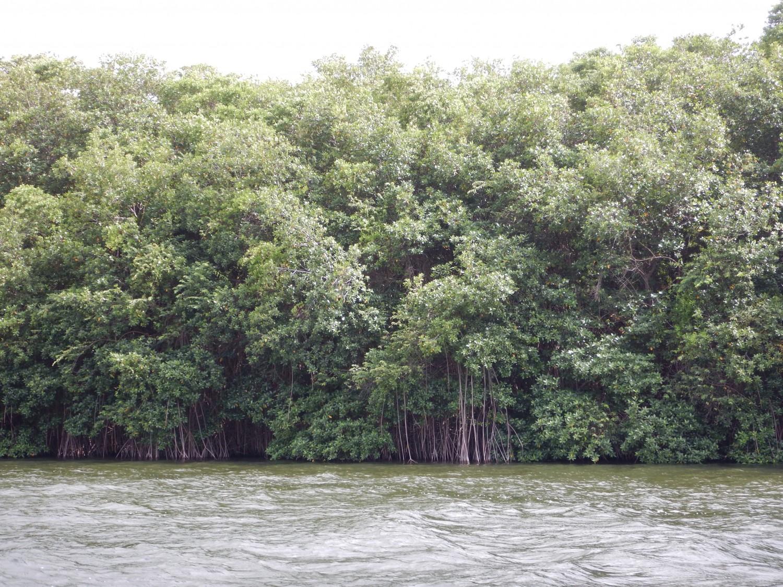 Belize river boat tour (6)