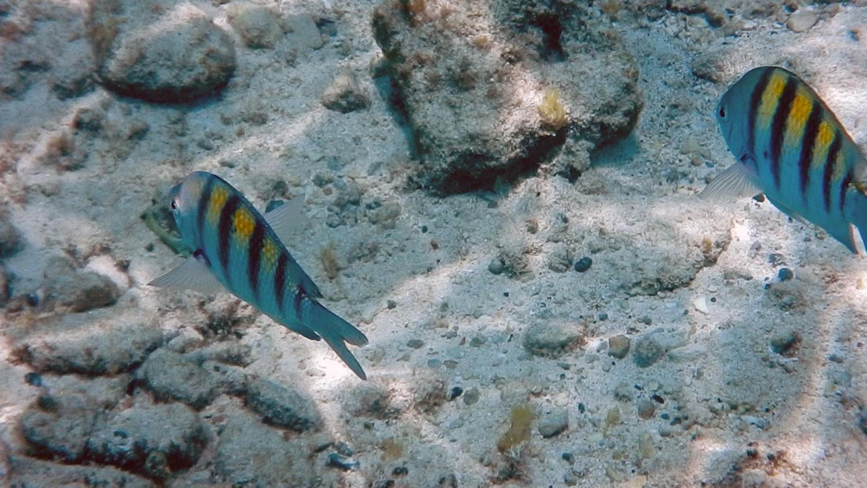 cozumel fishes