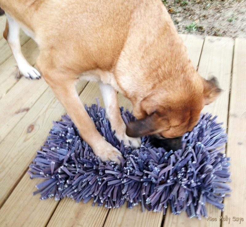 wooly-snuffle-mat-with-tan-german-shepherd-lab-mix