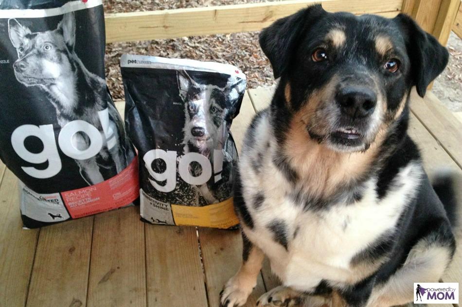 australian-shepherd-lab-mix-with-petcurean-sensitivity-plus-shine-go-dog-food-4