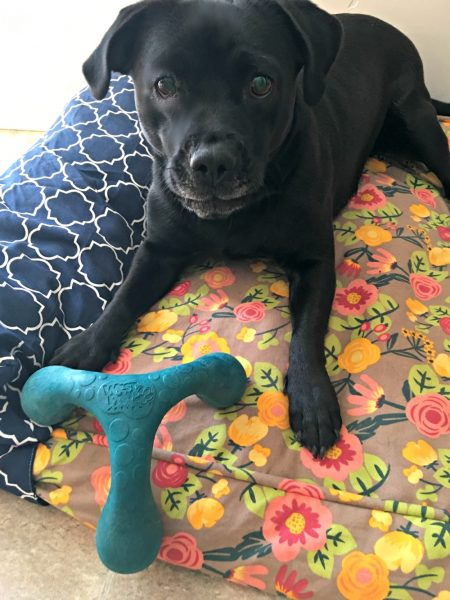 wox-dog-toy-powered-by-mom
