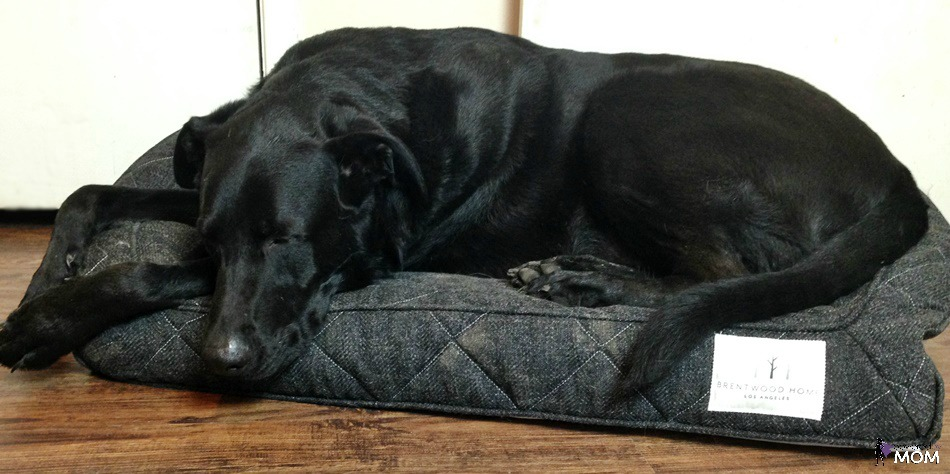 Brentwood Home Orthopedic Pet Bed with German Shepherd lab mix