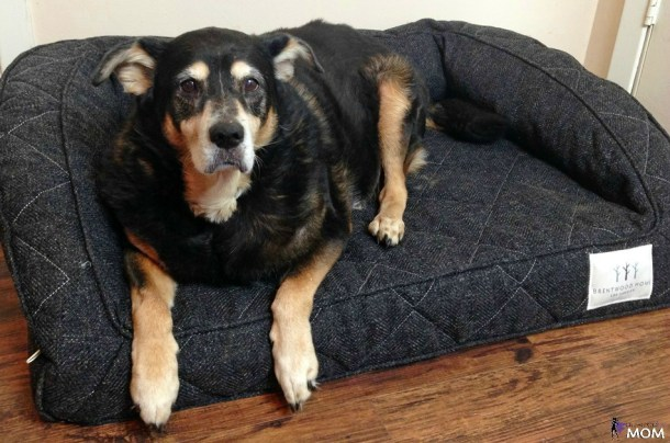 Brentwood Home Orthopedic Pet Bed with senior Rottweiler Mix