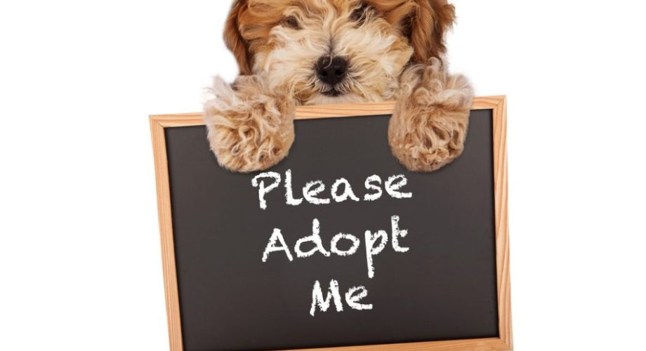 Adopting a Pet: Getting Your Children Their First Pet