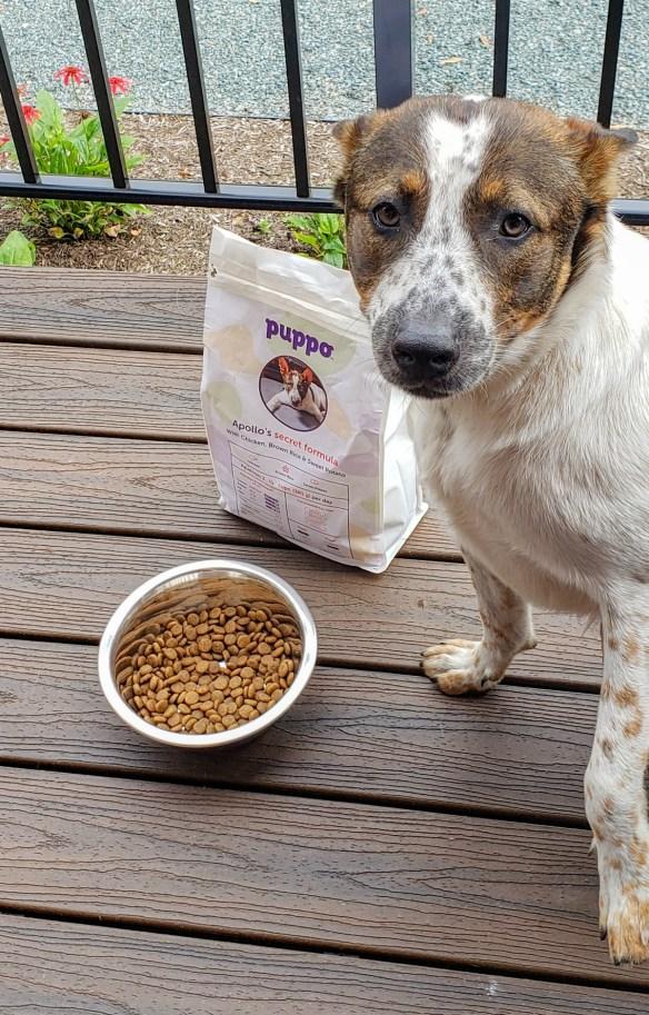 puppo customized dog food