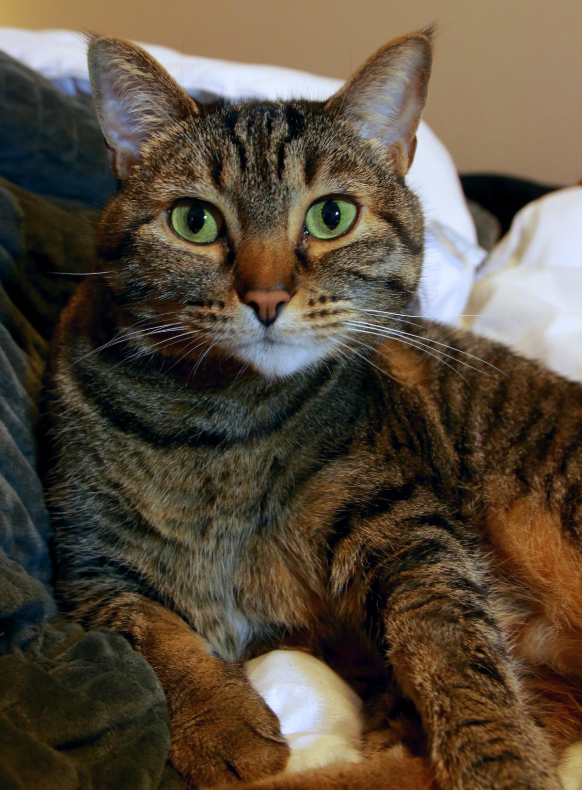 Cat Happy Catalyst Cat Litter