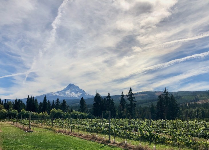 Hood River apple picking Mt View Orchard