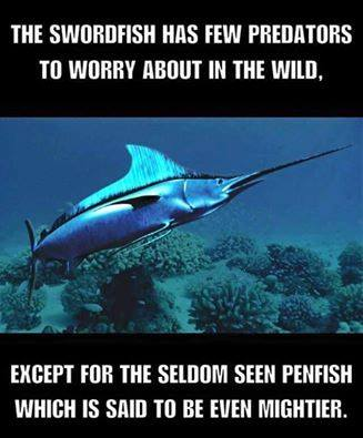 Swordfish Penfish