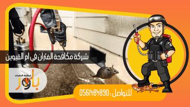 صورة شركة مكافحة الفئران في ام القيوين
