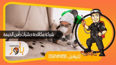 صورة شركة مكافحة حشرات في راس الخيمة