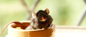 شركة مكافحة فئران بالشارقة