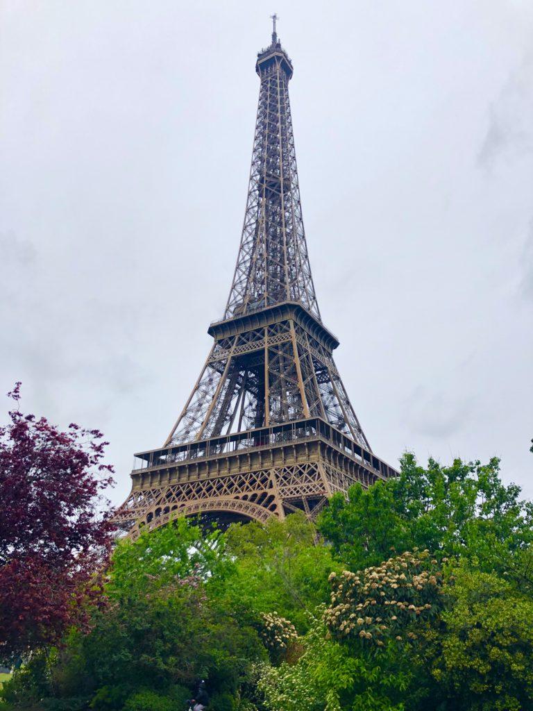 Sicht über blühende Büsche auf den Eiffelturm