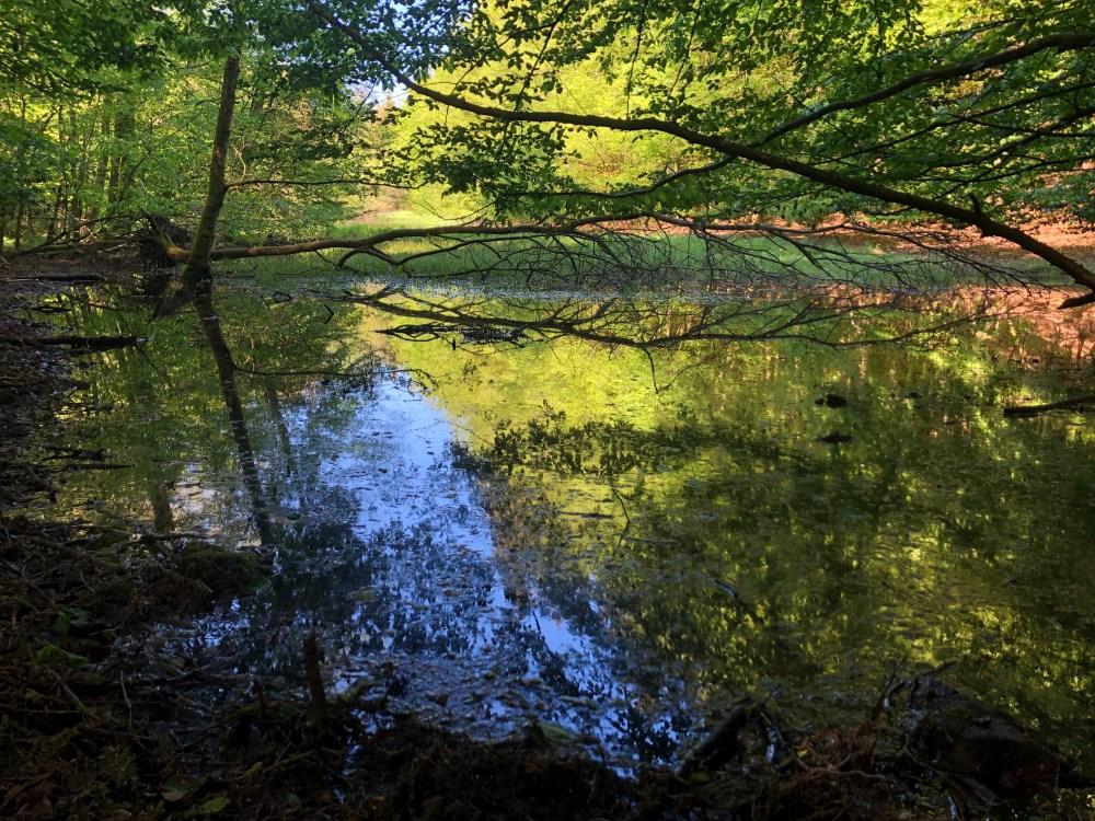 Kleiner Teich umzingelt von blühenden Pflanzen