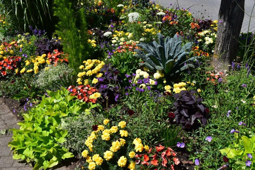 Blumen bei dem Rathaus von Niederbronn