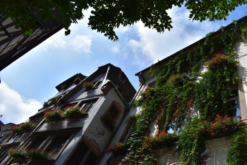 Mit Efeu bewachsene Häuser