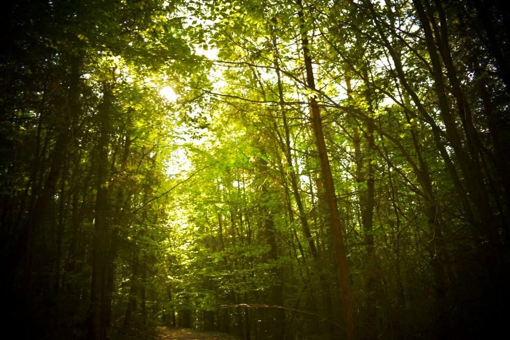 Bäume die von der Sonne beleuchtet werden