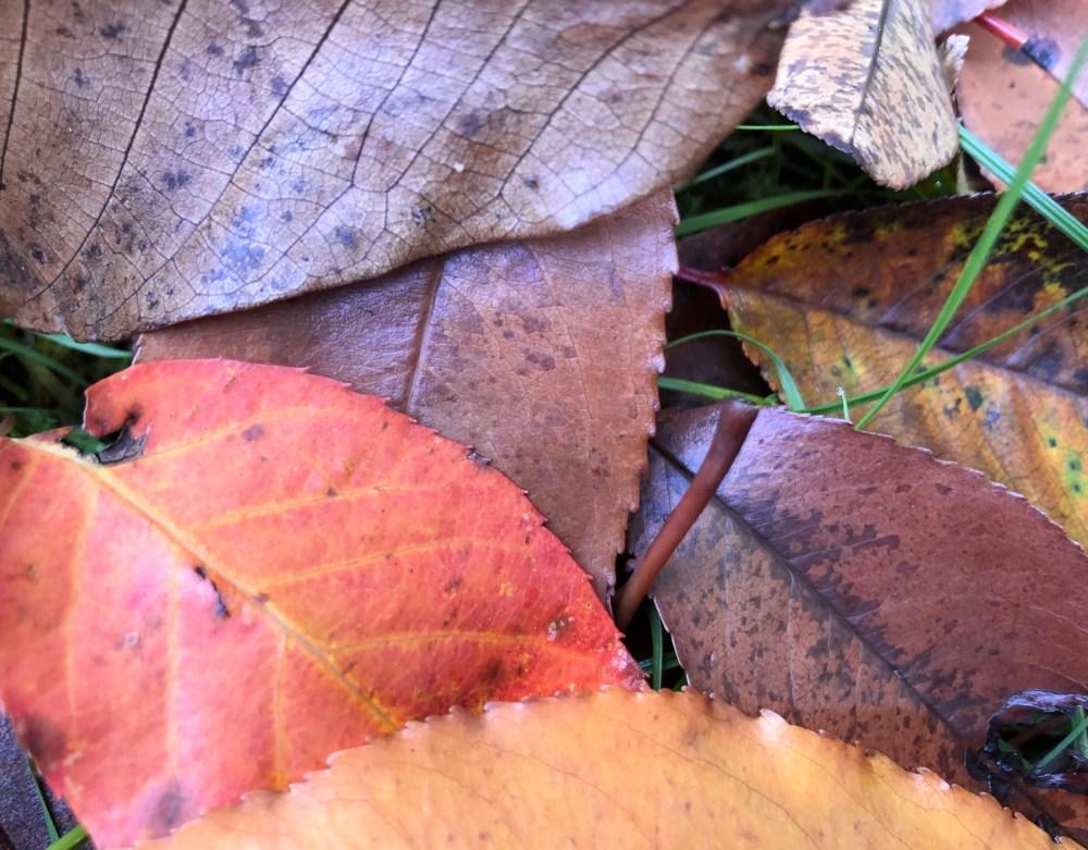 Blätter Haufen im warmen Farbton