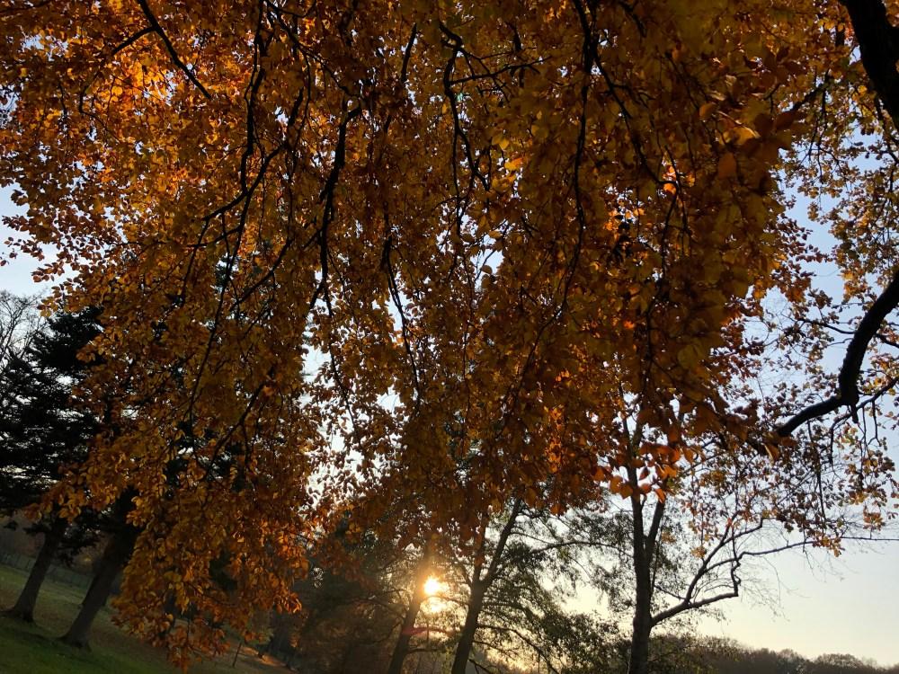 Golden strahlende Blätter mit Sonne im Hintergrund
