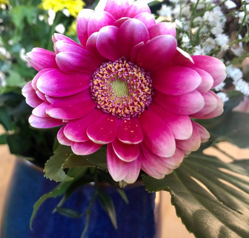 Pinkfarbene rosenartige Blume in einem Blumenstrauß