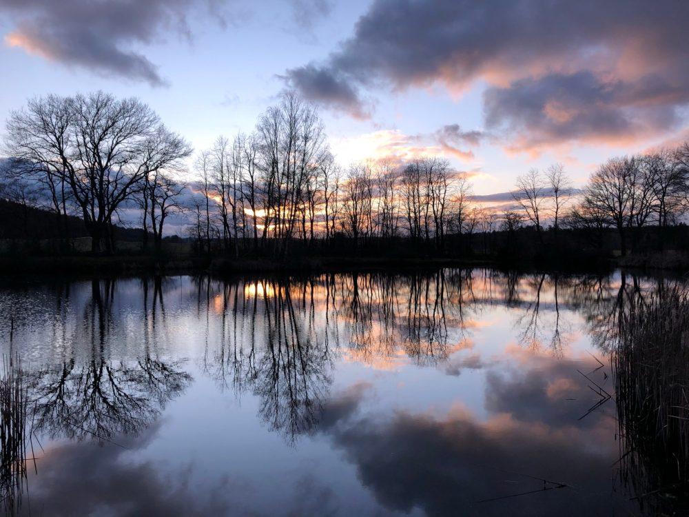 Himmel während dem Sonnenuntergang spiegelt sich mit den Silhouetten der Bäume im Gänseweiher