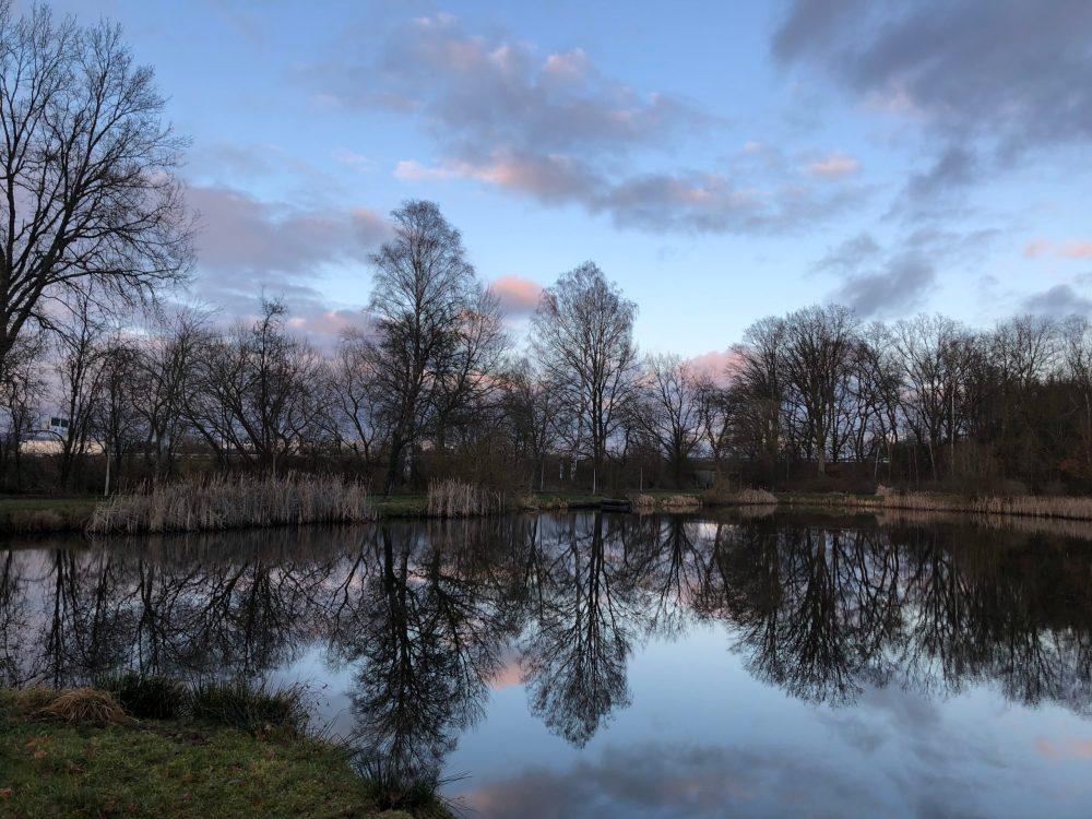 Bäume des anderen Ufers spiegeln sich im Weiher