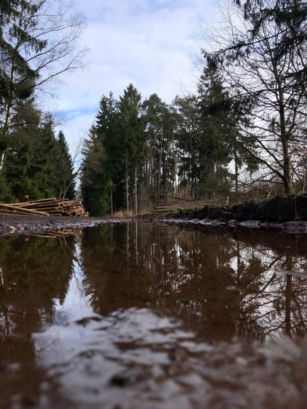Spiegelung auf einer Pfütze mit gestapelten Baumstämmen im Hintergrund