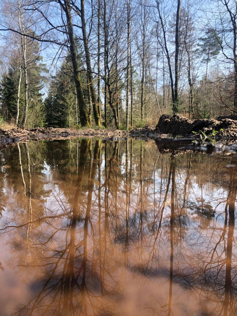 Reflexion der Bäume auf einer matschigen Wasseroberfläche